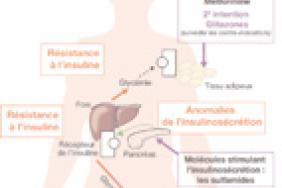 Physiopathologie du diabète de type 2 - Rôles respectifs de l ...